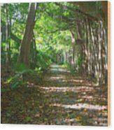 Southlands Wood Print