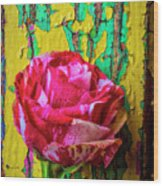 Soutime Rose Against Cracked Wall Wood Print