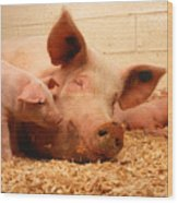 Sow And Piglets Wood Print