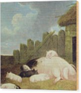 Sow With Piglets In The Sty  Wood Print