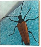 Space Age Beetle Wood Print