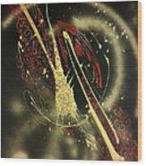 Space2 Wood Print