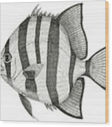 Spadefish Wood Print