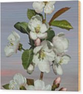 Spade's Apple Blossoms Wood Print