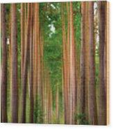 Spaghetti Trees Wood Print