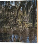 Spainsh Moss Hanging Over Pond On Middleton Place Wood Print