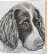 Spaniel Drawing Wood Print