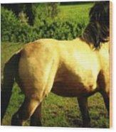 Spanish Horse Dancing Wood Print