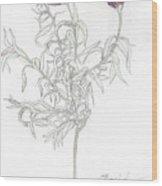 Spanish Lavender Wood Print