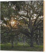 Spanish Moss During Sunset Wood Print