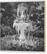 Spanish Moss Fountain With Bromeliads - Black And White Wood Print