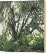 Spanish Moss In Motion Wood Print