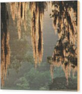 Spanish Moss In The Morning Wood Print
