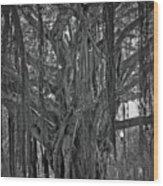 Spanish Moss Of The Tree Wood Print