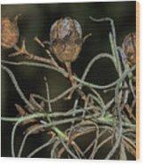 Spanish Moss On Azalea  Wood Print