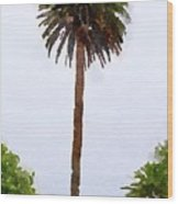 Spanish Palm Tree Wood Print