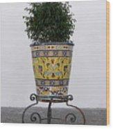 Spanish Planter Wood Print
