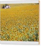 Spanish Sunflowers Wood Print