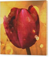 Sparkle Of The Tulip Wood Print by Cathie Tyler