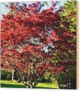 Sparkling Japaneese Maple Tree Wood Print