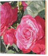 Sparkling Roses Wood Print
