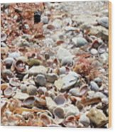 Sparkling Shells Wood Print
