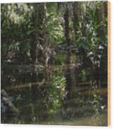 Sparkling Swamp Wood Print