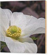 Sparkling White Anemone Wood Print