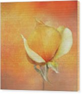 Sparkly Peach Rose Wood Print