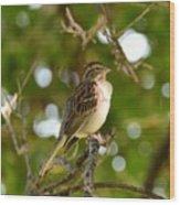 Sparrow-1 Wood Print