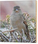 Sparrow 2 Wood Print