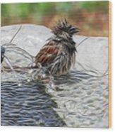 Sparrow Bath Time 9242 Wood Print