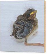 Sparrow Chick Wood Print