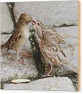Sparrow Feeding Fledgelings Wood Print