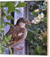 Sparrow In The Shrubs Wood Print