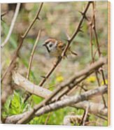 Sparrow In The Thorns Wood Print