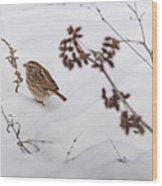Sparrow In The Winter Snow Wood Print