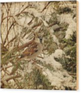 Sparrow In Winter Iv - Textured Wood Print