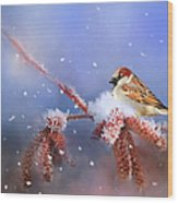 Sparrow In Winter Wood Print