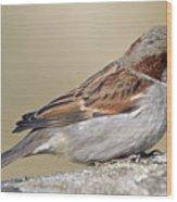 Sparrow Wood Print by Melanie Viola