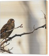 Sparrow On A Limb Wood Print