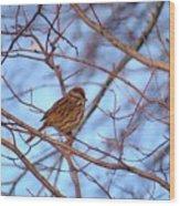 Sparrow On Blue Wood Print