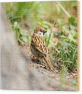 Sparrow On The Ground Wood Print