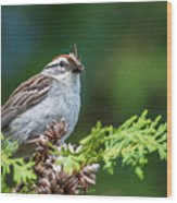 Sparrow With Lunch Wood Print