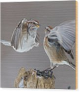 Sparrows Fight Wood Print