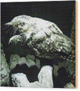Special Bird Wood Print