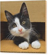 Special Delivery Tuxedo Kitten Wood Print
