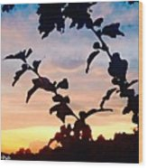 Special View Of Sunset Wood Print