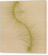 Species Number One F Wood Print