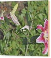 Speciosum Magnificum Wood Print